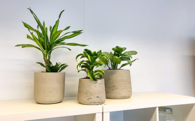 Kleine plantenbakken