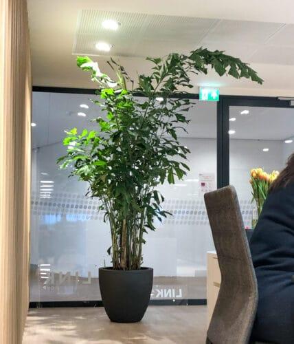 Grote plant op kantoor bij Link Asset Services