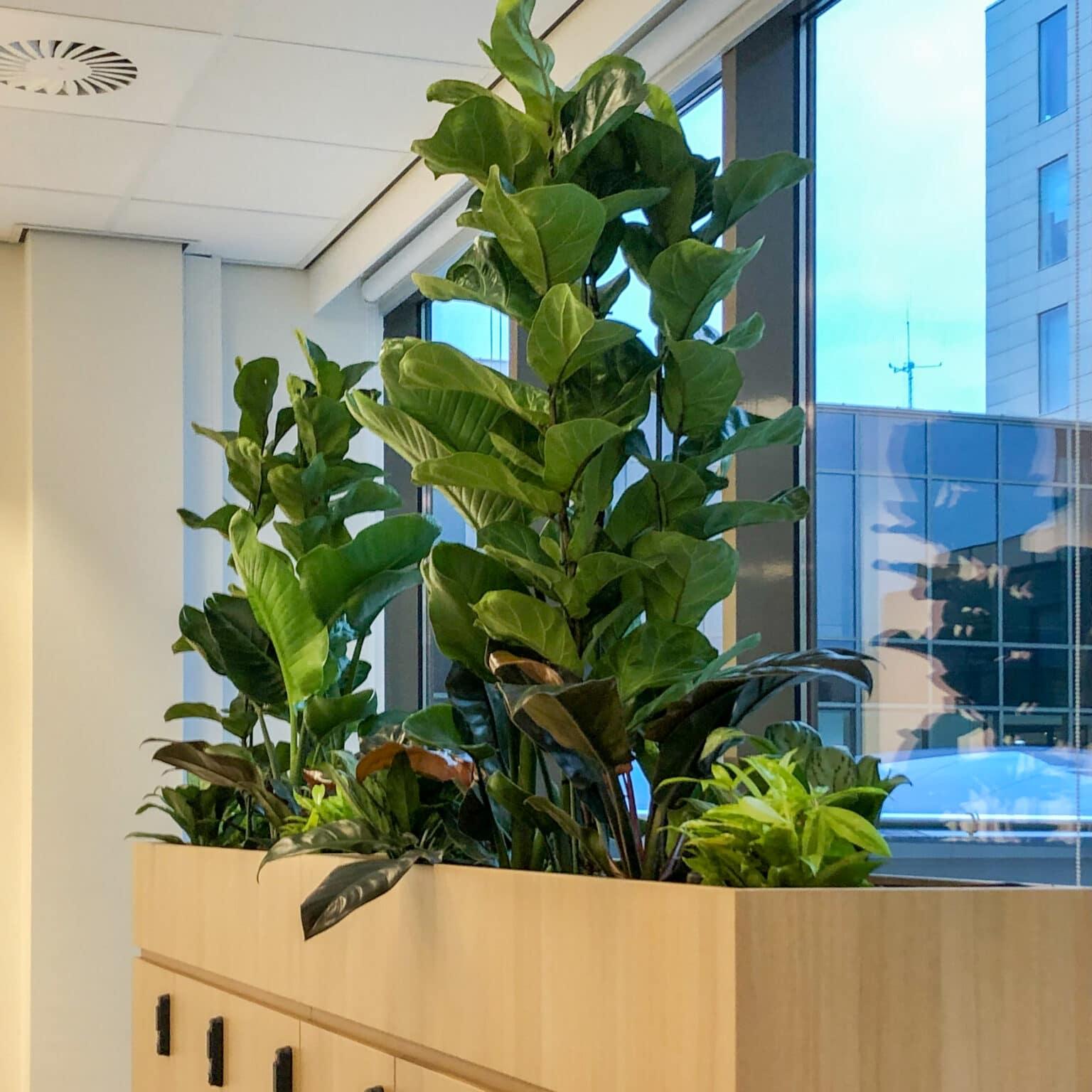 Kantoorbeplanting bij Link Asset Services