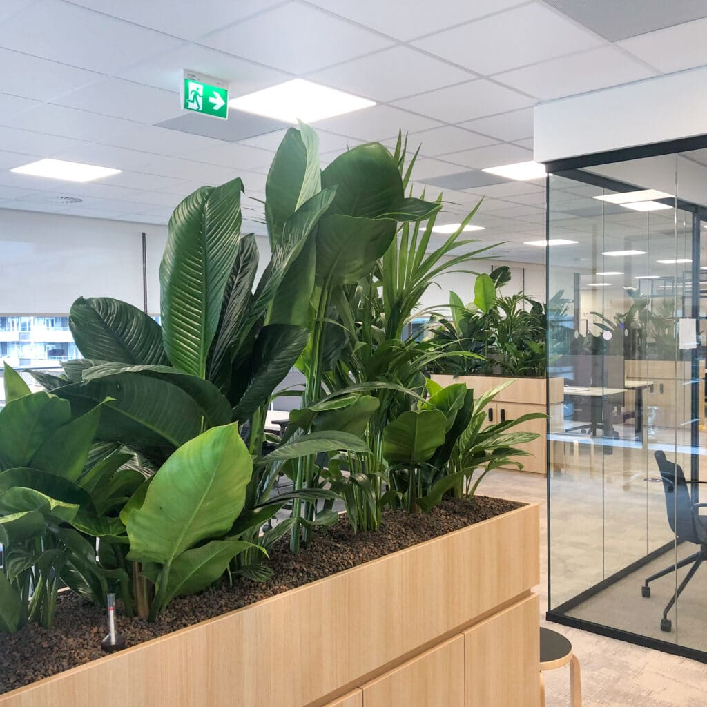 Gezonde luchtzuiverende planten