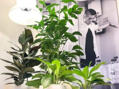 kantoorbeplanting bij Fonds voor Cultuurparticipatie