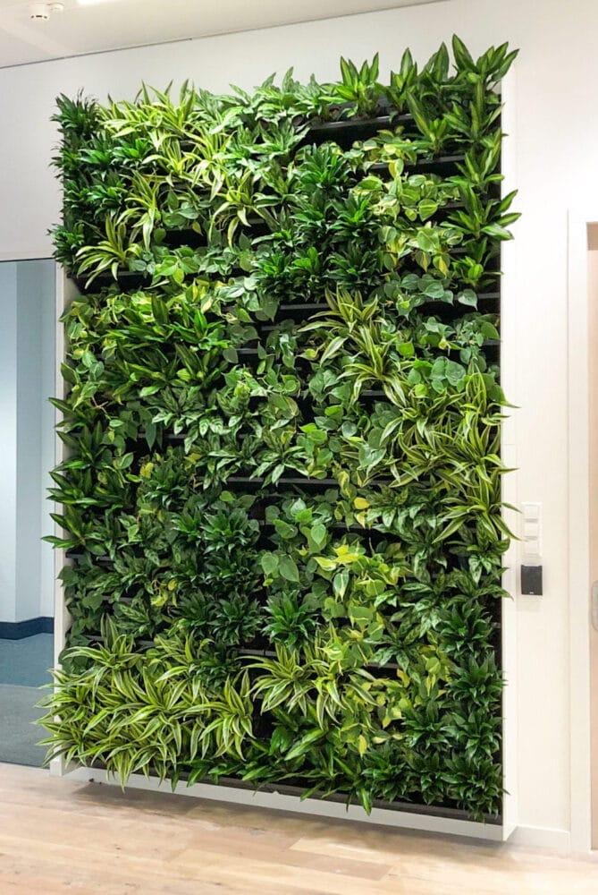 veelzijdige groene wand op kantoor
