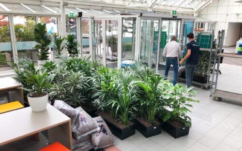 Planten levering door Hoogendoorn Projectbeplanting