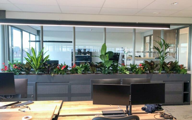 Luchtzuiverende planten bij VSE