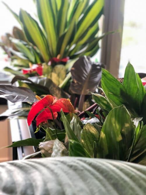 Detail roomdivider met planten