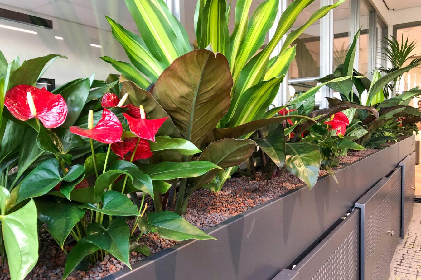Roomdivider met kleurrijke beplanting bij VSE