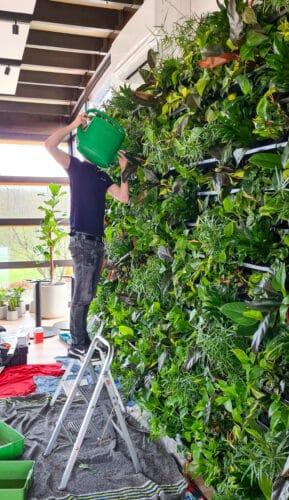 Verzorging plantenwand