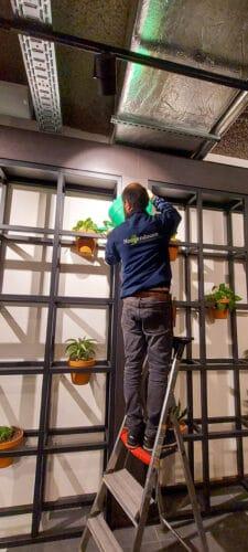 Onderhoud van Kantoorplanten