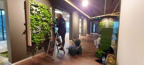 Plantenwand onderhoud