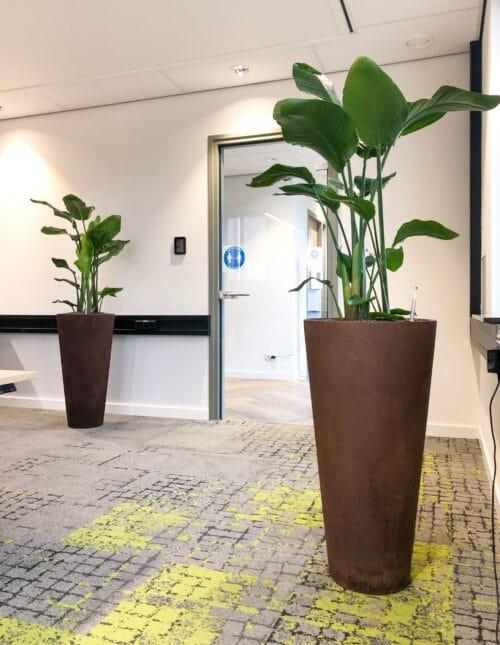 Grootbladige planten bij VSE op kantoor