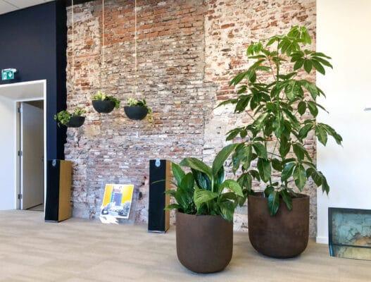 Kantoorbeplanting in Utrecht