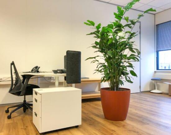 Caryota in roestkleur plantenbak bij The Cookware Company