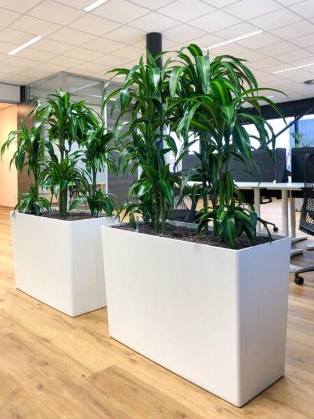 Witte roomdividers met planten bij The Cookware Company
