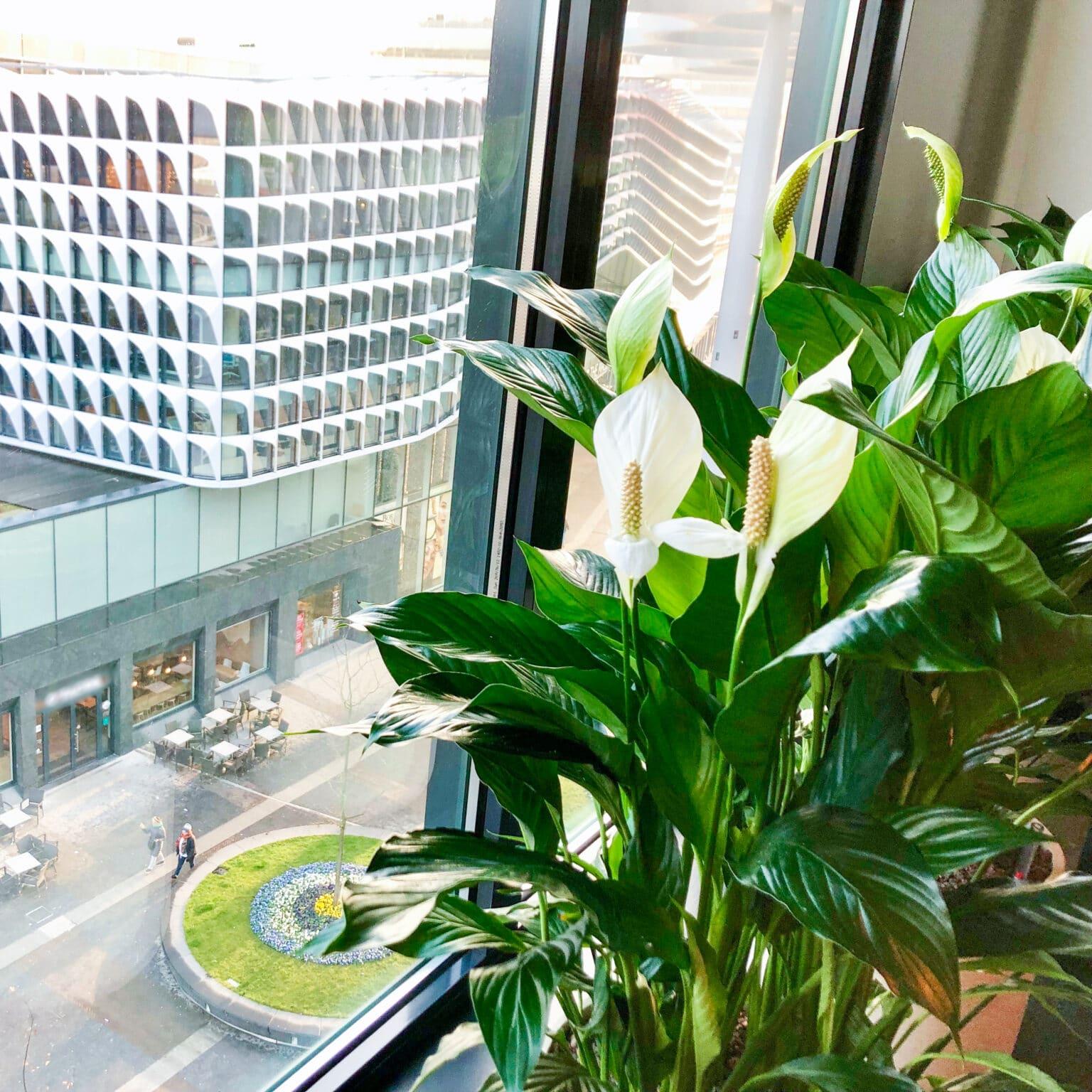 Kantoorbeplanting Utrecht